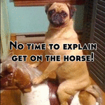 No time to explain get on the horse!
