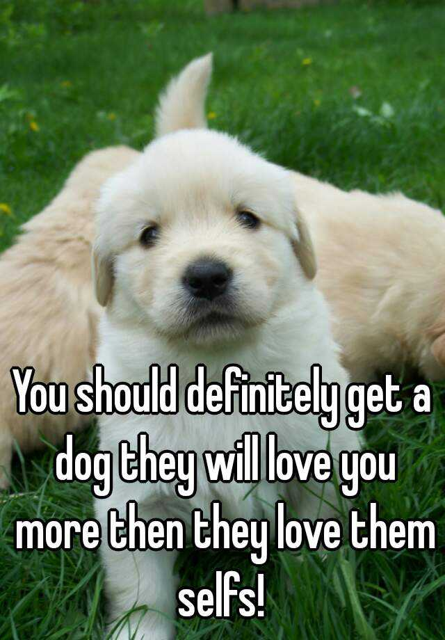 You should definitely get a dog they will love you more then they love them selfs!