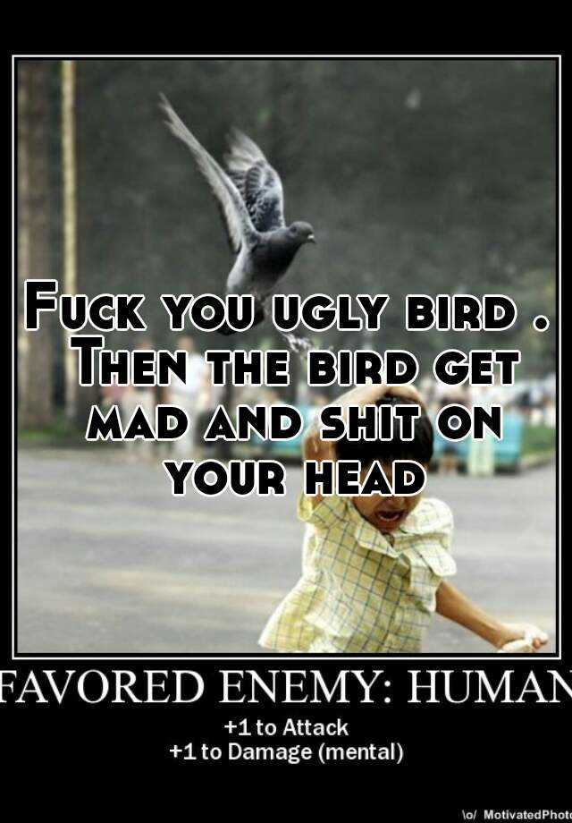 Fuck you ugly bird . Then the bird get mad and shit on your head