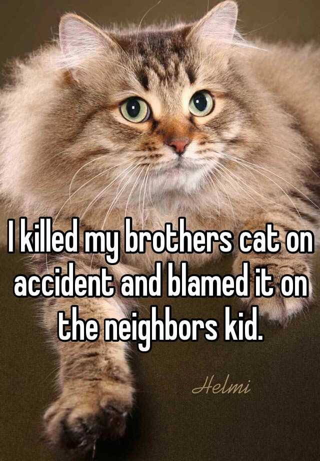I killed my brothers cat on accident and blamed it on the neighbors kid.